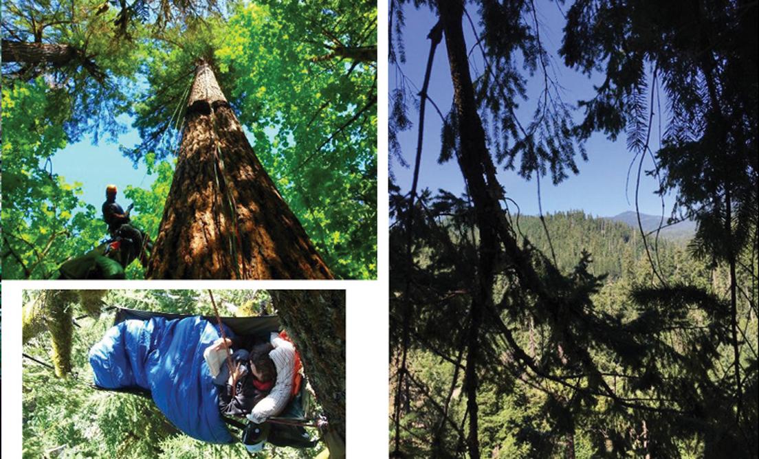 Pacific Tree Climbing